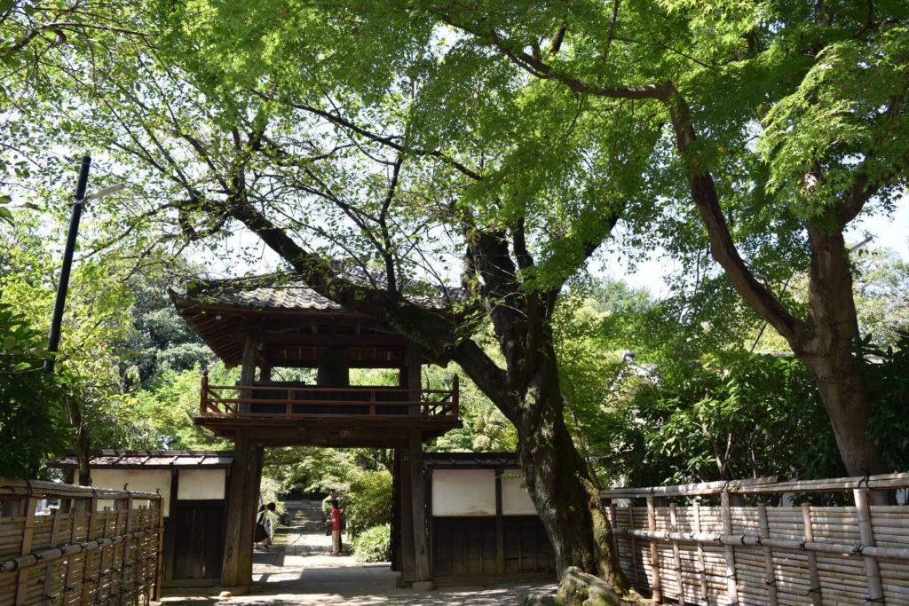 緑の木々と川越中院の山門