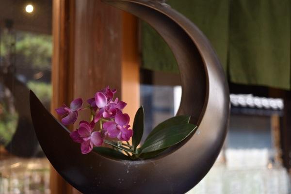 川越のある店先に飾られていた小さい紫色の花