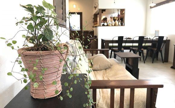 秩父長瀞のカフェうらほとの店内(棚に置かれた観葉植物越しに見えるソファとテーブル)