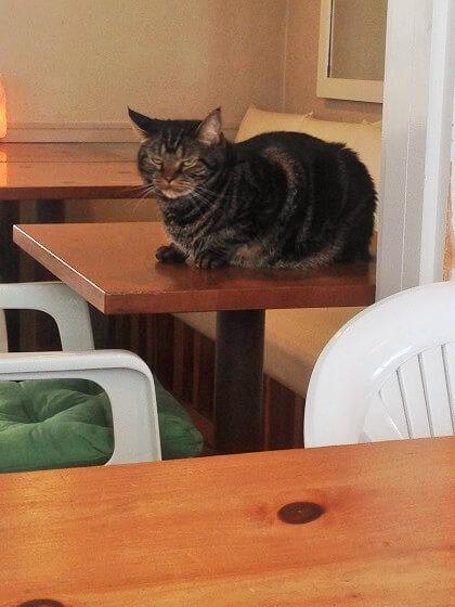 カフェポルトメゾンルームスの看板猫