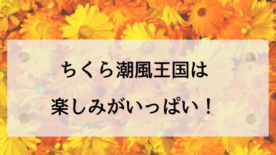 画面いっぱいの鮮やかな黄色のキンセンカの花(ちくら潮風王国アイキャッチ画像)