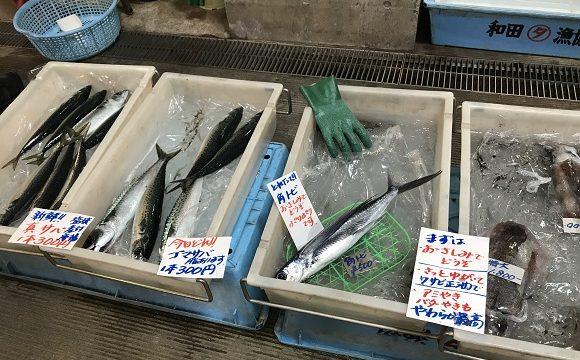 ちくら潮風王国の鮮魚店前に並べられた獲れたての魚たち