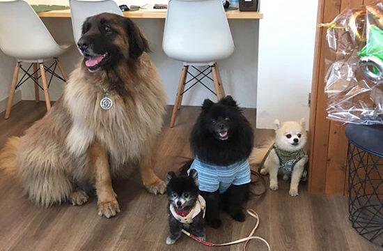 カフェグリーンの看板犬とお客様のわんこ達