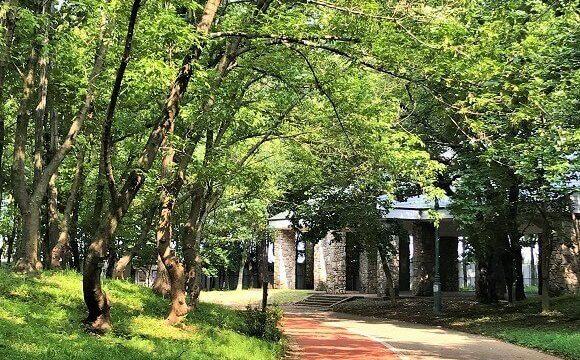 彩の森入間公園(木々の間から木漏れ日がもれる園内の道)
