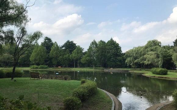 彩の森入間公園の円内にある上池と豊かな緑