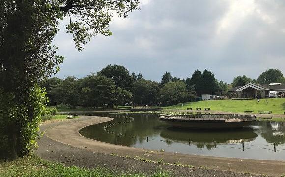 彩の森入間公園の大きな噴水がある上池