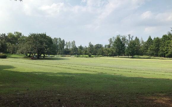 彩の森入間公園の手入れをされた広い芝生広場