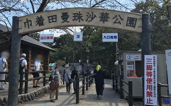 巾着田への道(到着)