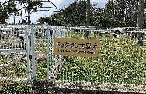 館山ファミリーパークの整備されたドックラン