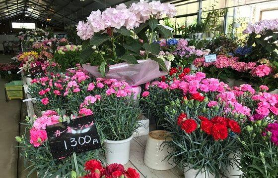 館山ファミリーパークの花の販売所の様子